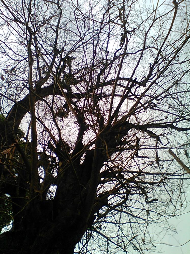 Pohon yang meranggas, serasa di Eropa (halah..)