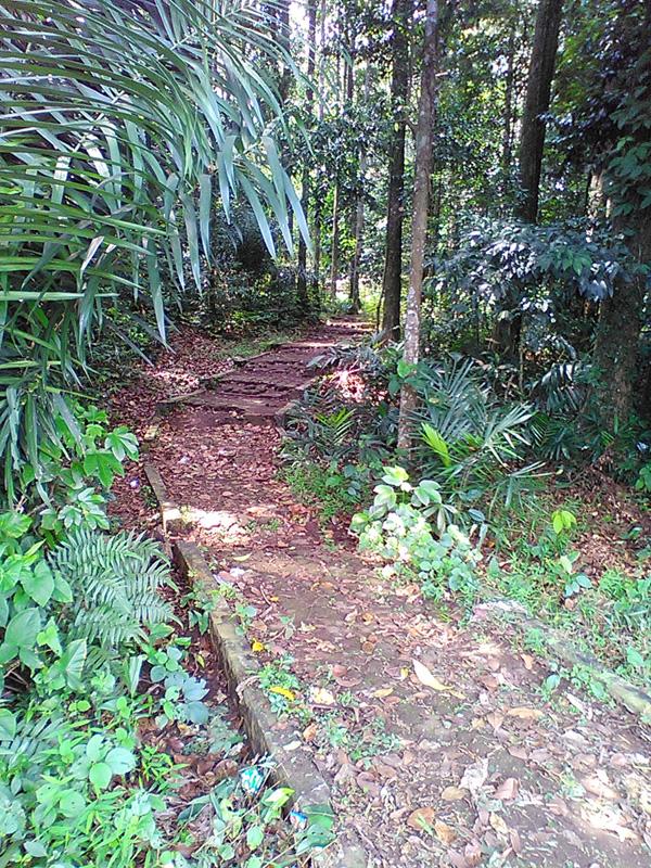 Jalan setapak ke dalam hutan