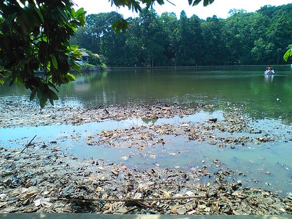 Miris melihat timbunan sampah yang memicu pendangkalan danau :(