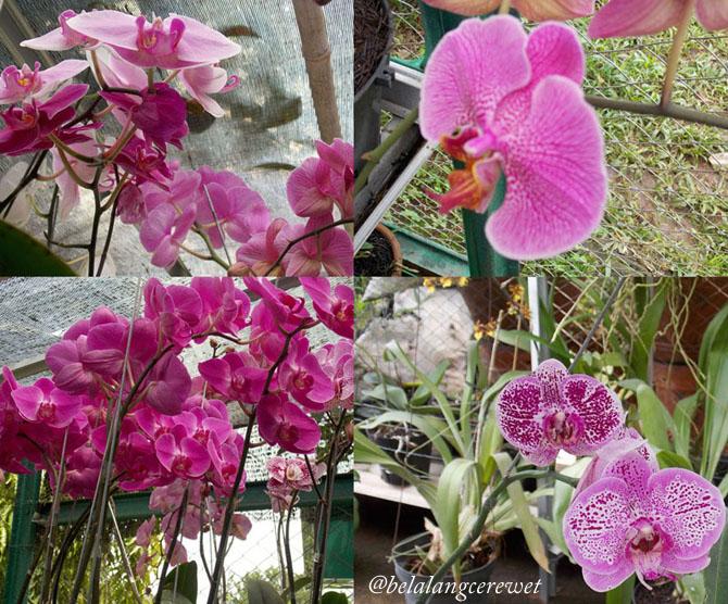 bunga copy
