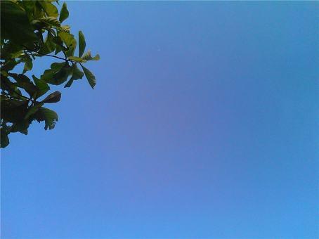 Daun dan langit - hijau dan biru harmonis